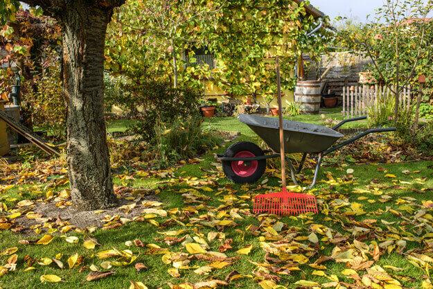Herbstlicher Garten mit Laub auf dem Rasen, Schubkarre und Laubrechen