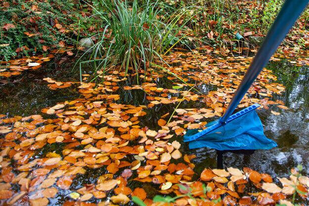 Teich mithilfe eines Keschers von Laub befreien