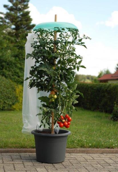 Starter Set Tomatenhut Vorhang offen