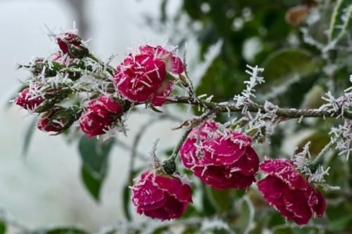 Garten-winterfest